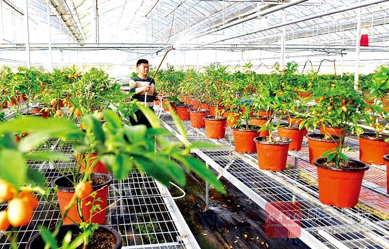 图文:培育新品农作物