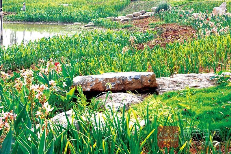 组图:向阳湖国家湿地公园风景如画