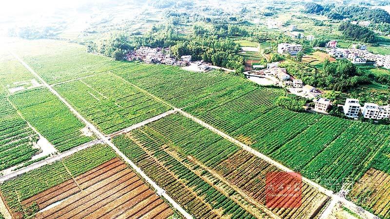 图文:特色产业助农增收