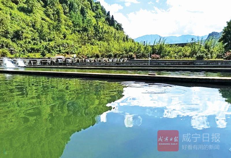 """圖文:中華鱘""""暢游""""青山綠水間"""