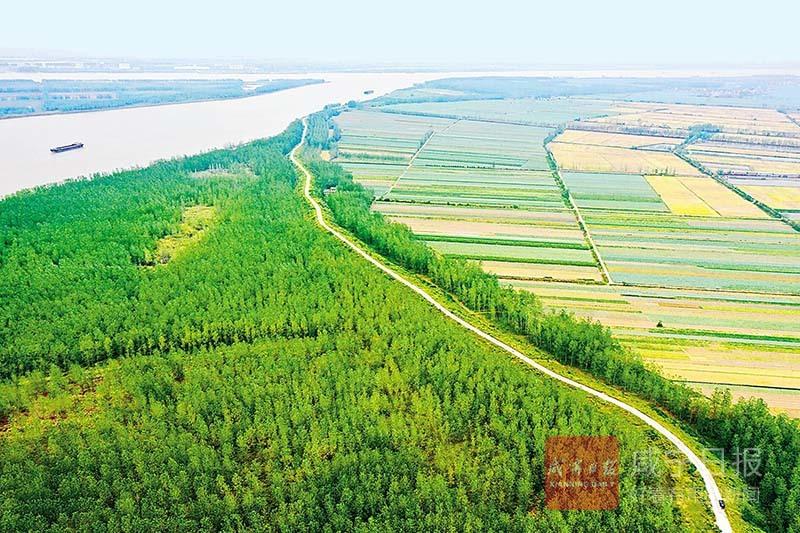 图文:咸宁市3年沿江造林11万亩