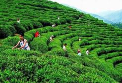 孟祥伟王远鹤到赤壁调研督办茶产业大会筹备工作