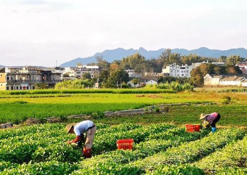崇阳春节乡村游受青睐 接待游客43.09万人次,旅游综合收入2539.3万元