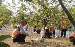 嘉鱼县4万株树木穿上防护衣