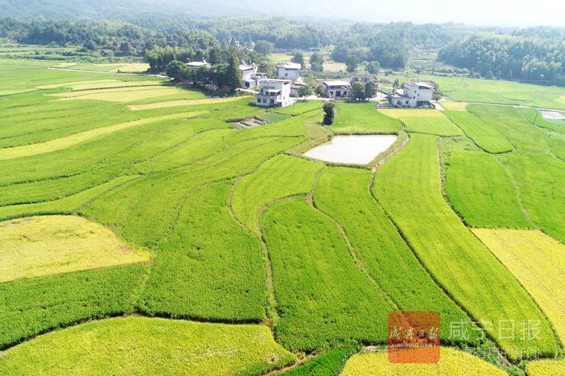 幕阜山水孕珍品黃浦江畔謀發展 通城綠色農特產品香飄上海