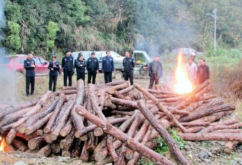 咸安啟動執法專項行動  集中銷毀松線蟲病疫木